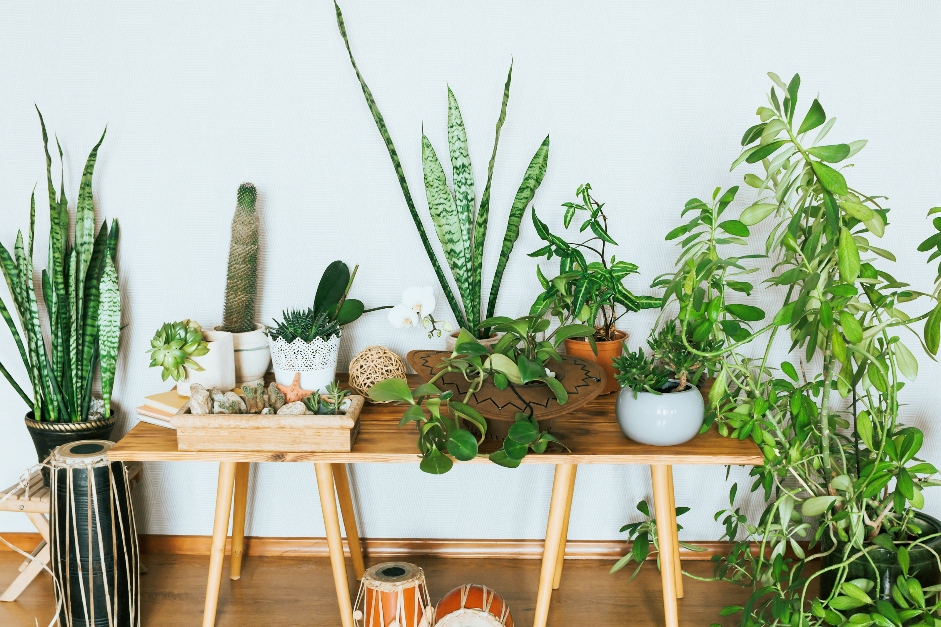 5 Low Maintenance Plants Perfect for your Apartment